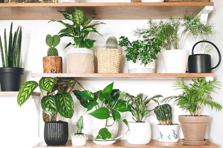 Hardy Houseplants And Other Spring Business